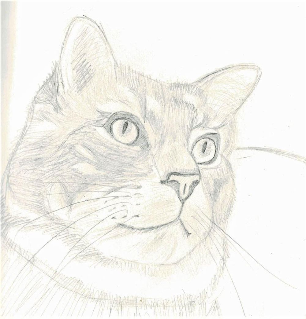 Cat Drawing - image 1 - student project