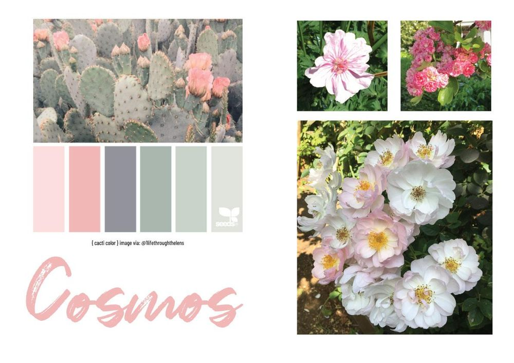 Cosmos Flowers - image 2 - student project