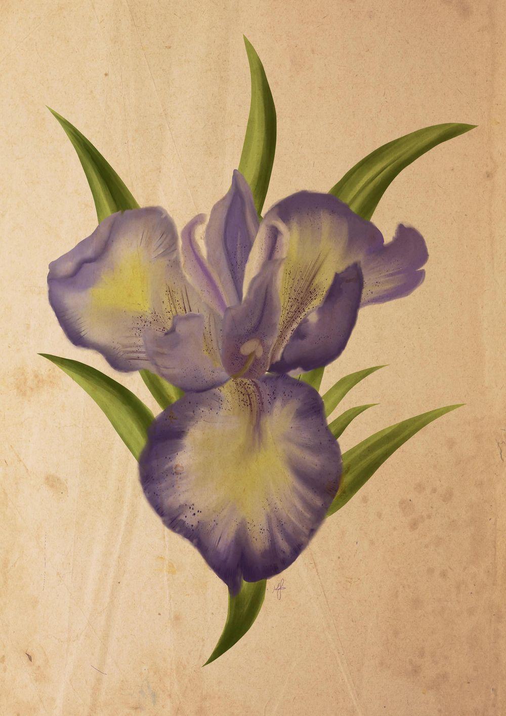 Iris study - image 1 - student project
