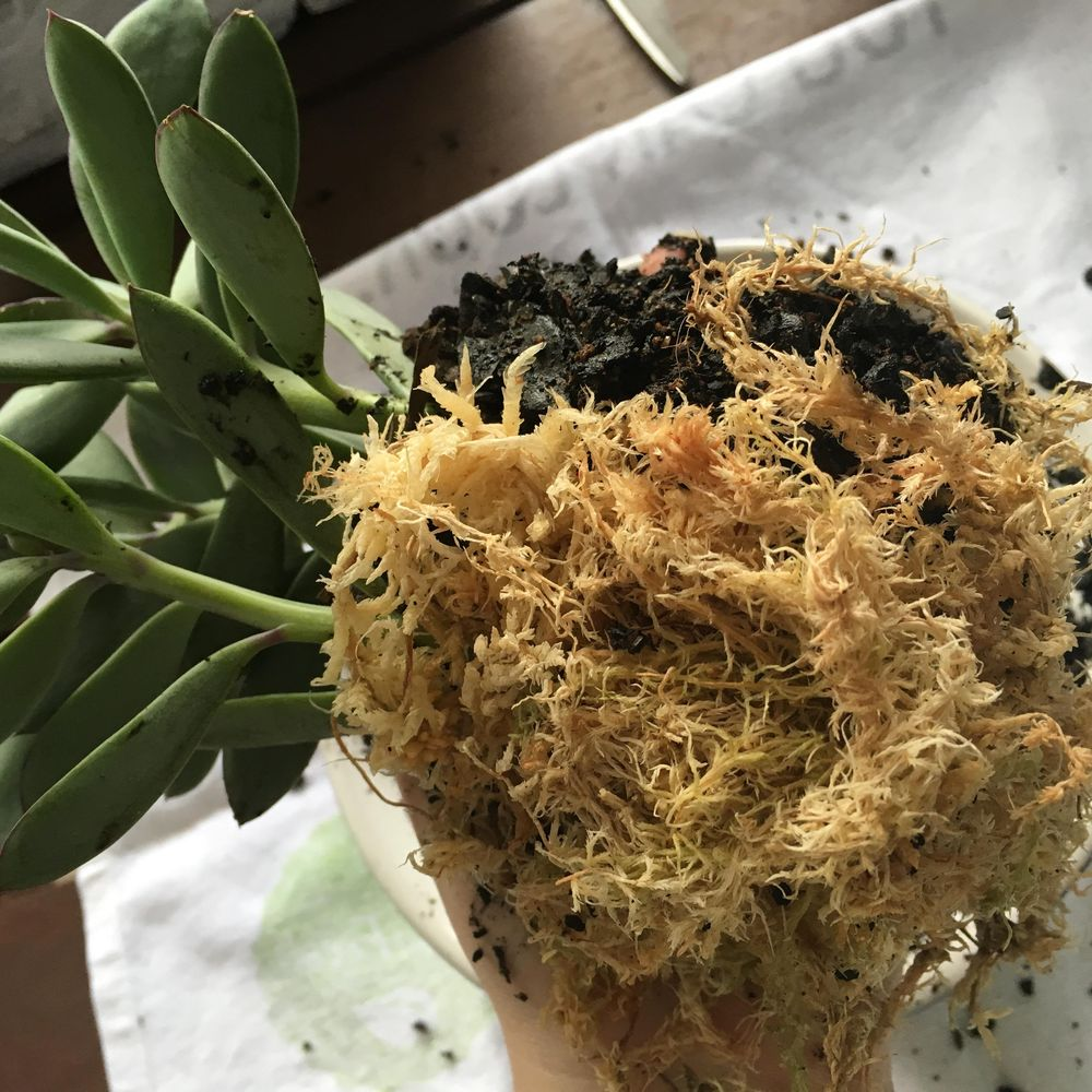 Sample project - create your own kokedama - image 3 - student project