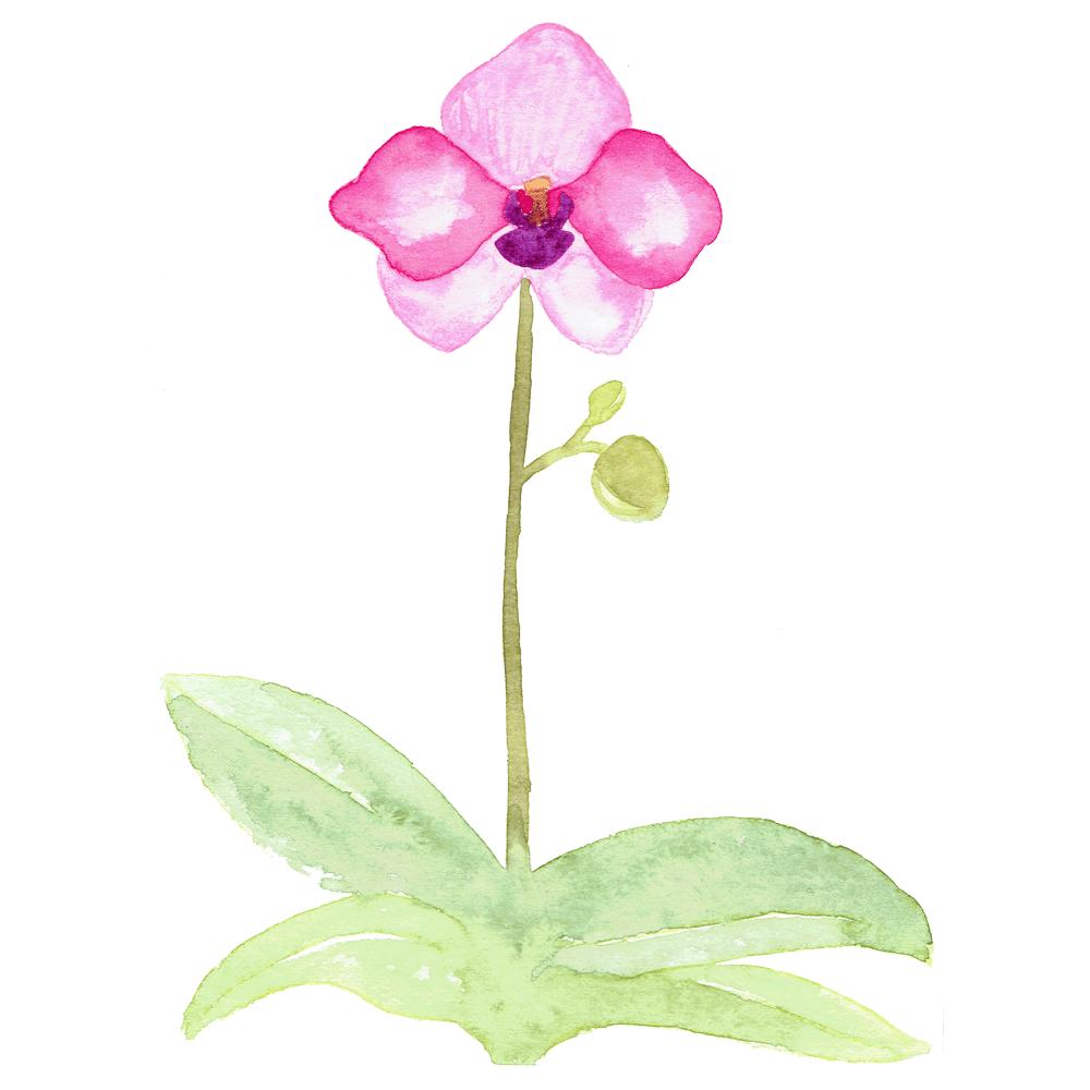 Orchidées - image 2 - student project