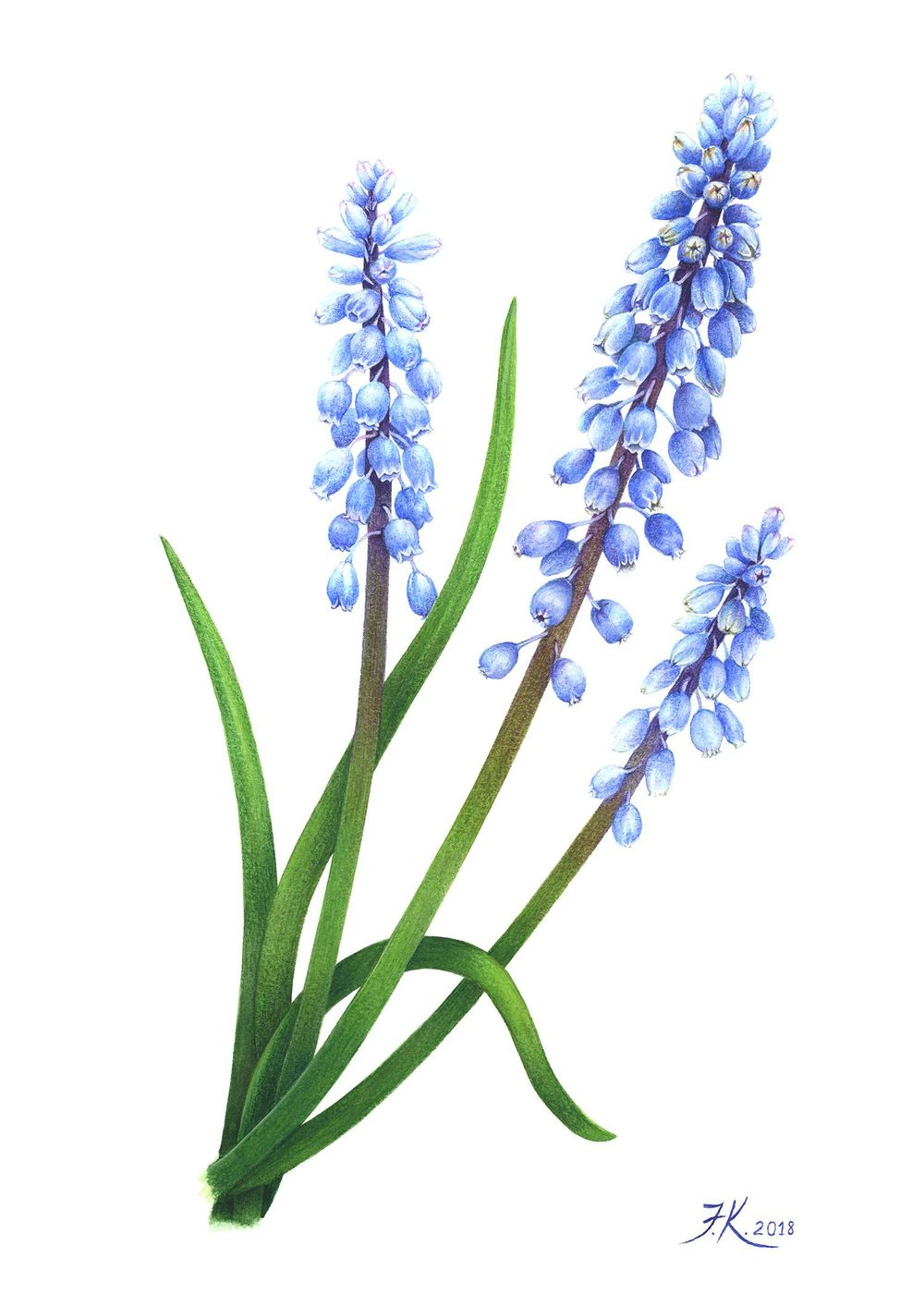 Vintage-Inspired grape-hyacinth - image 4 - student project