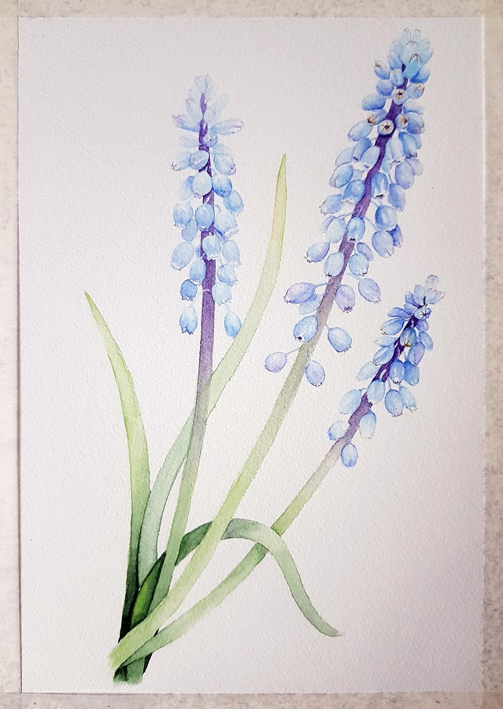 Vintage-Inspired grape-hyacinth - image 3 - student project