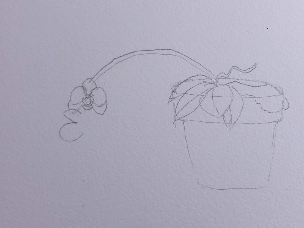 Orchid - image 3 - student project