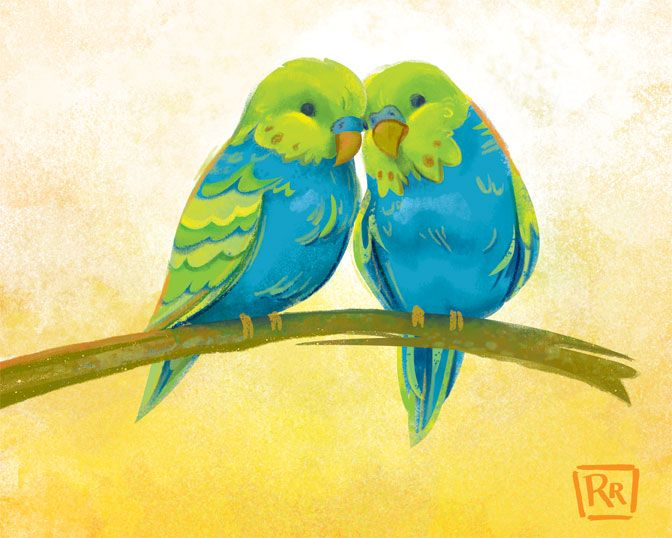 Budgie Love - image 3 - student project