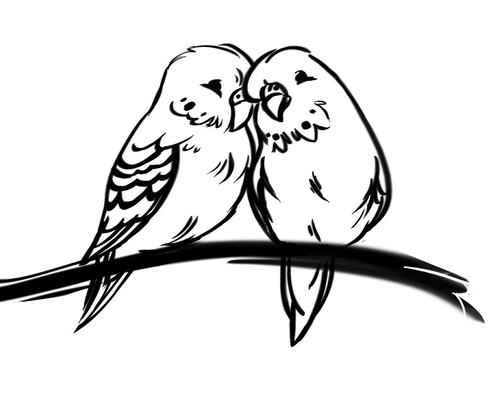Budgie Love - image 2 - student project