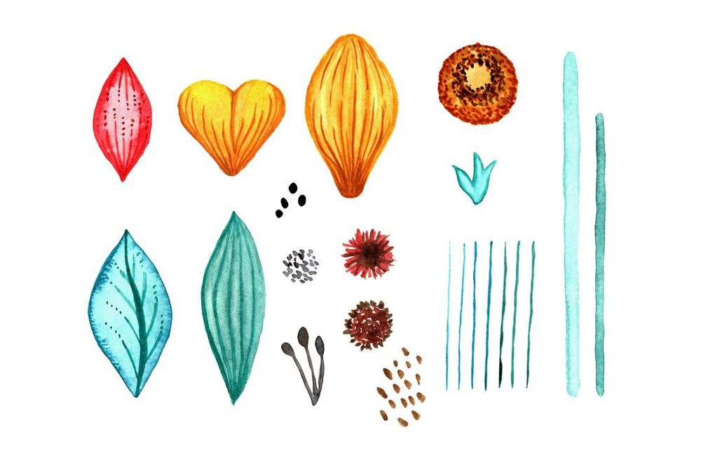 Watercolour to Digital Botanicals - image 2 - student project