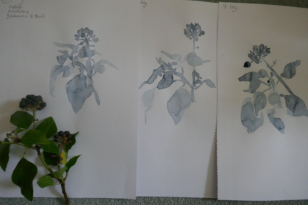 Wildflowers - image 3 - student project