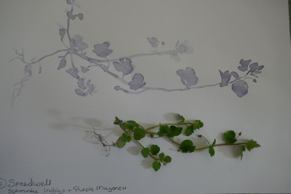 Wildflowers - image 2 - student project