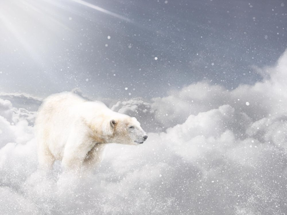 Polar bear in the sky - image 1 - student project