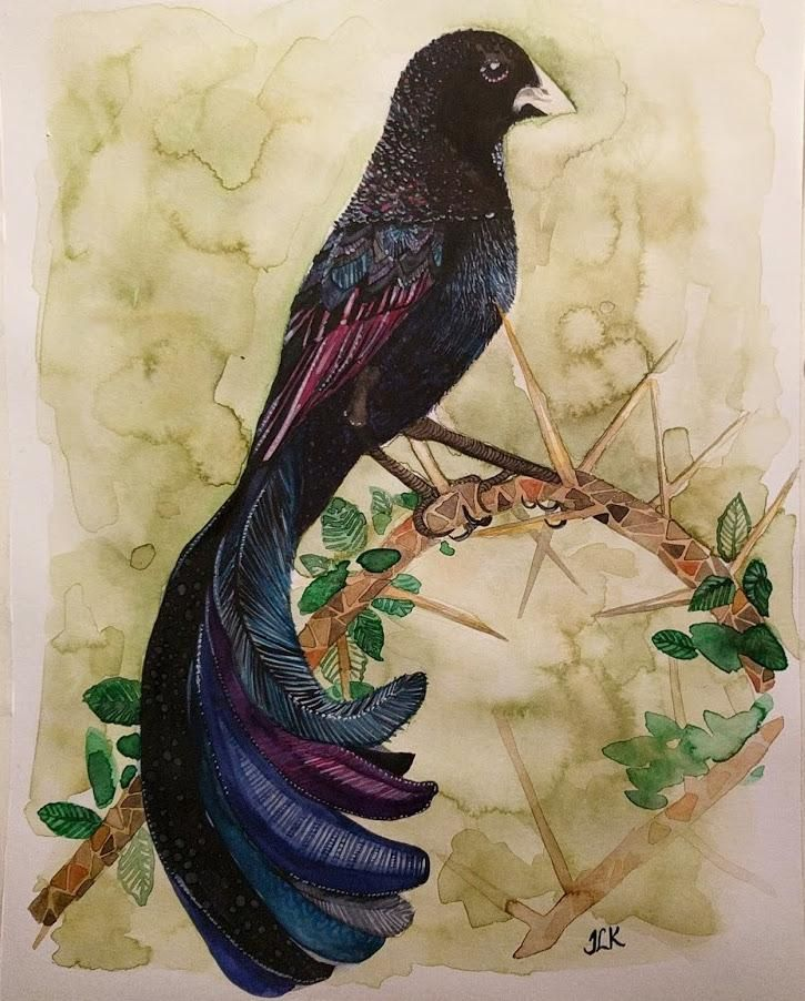 Jackson's widowbird. - image 3 - student project