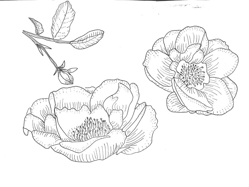 In Bloom Placement Print & Mock Up - image 1 - student project