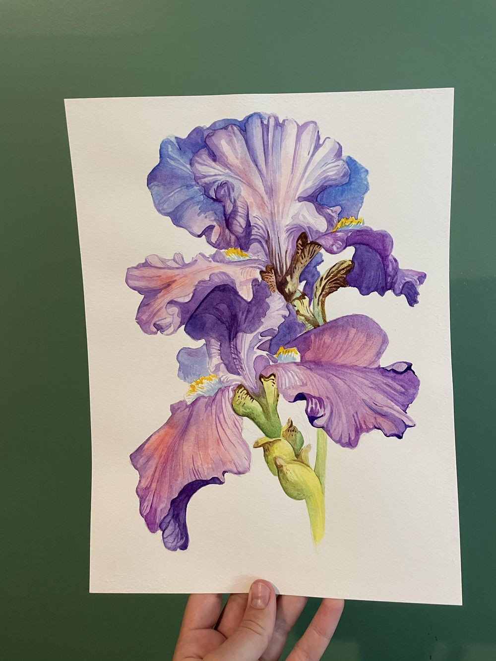 Iris Watercolor - image 1 - student project