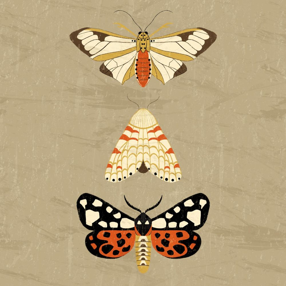 Moths - image 1 - student project
