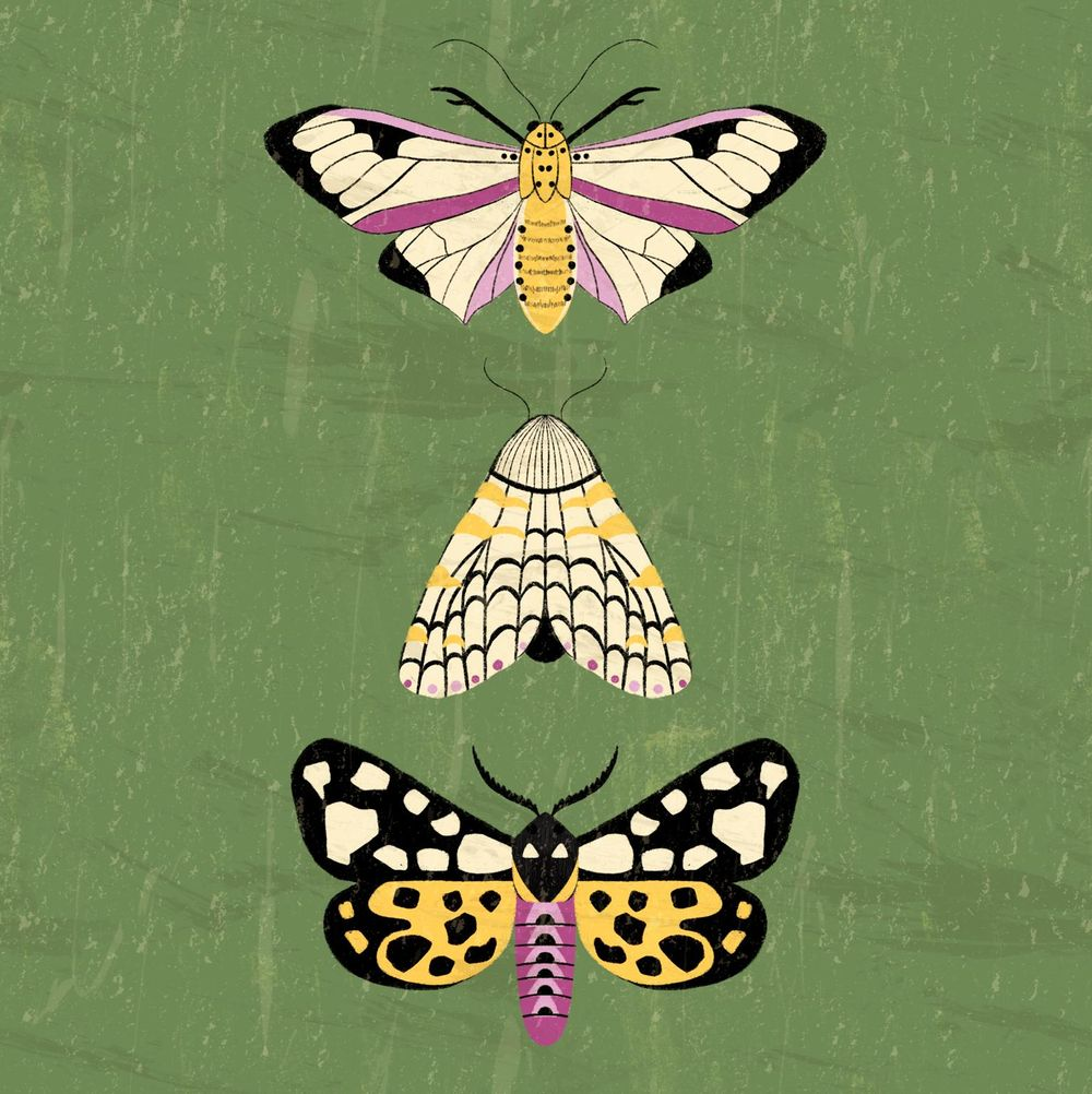 Moths - image 2 - student project