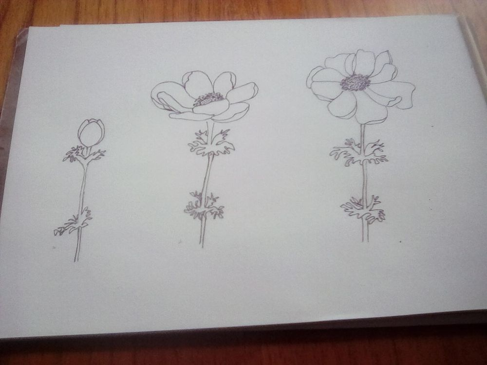 Line drawing anenomes - image 1 - student project