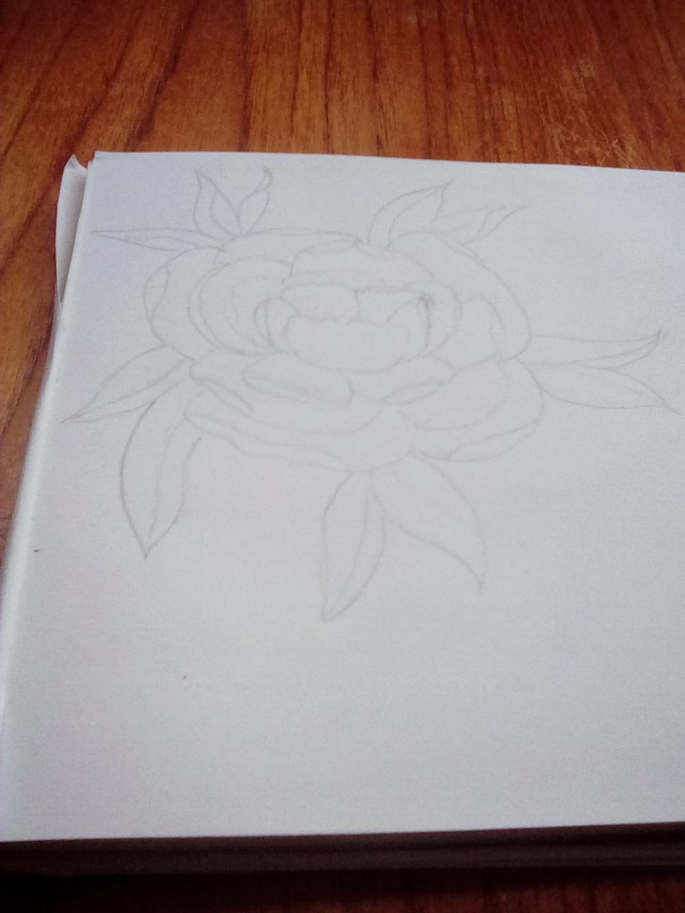 Line drawing peony - image 1 - student project