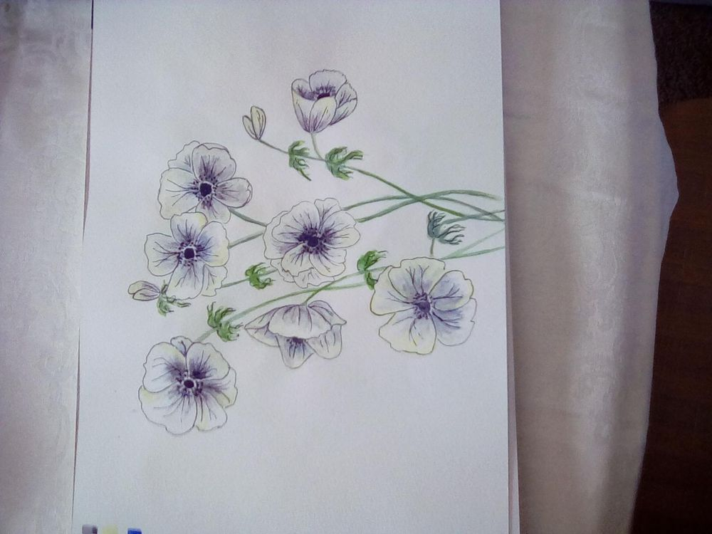 White anenomes - image 3 - student project