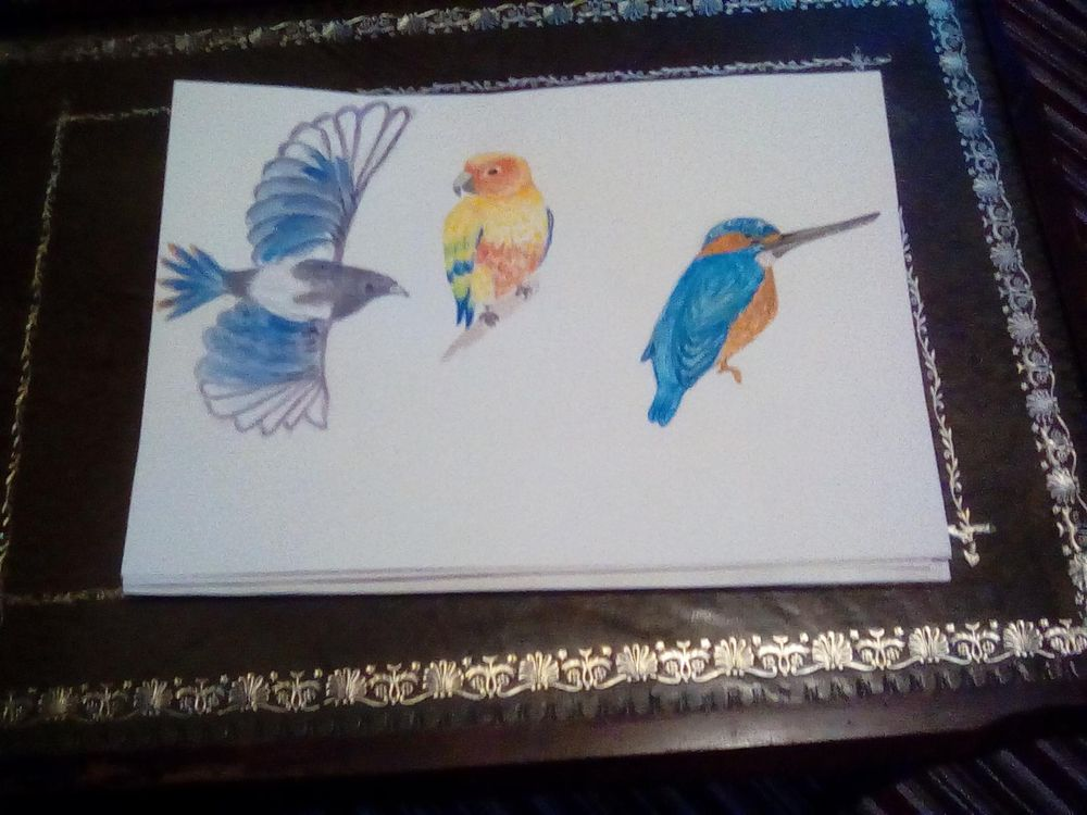 Watercolour birds - image 1 - student project