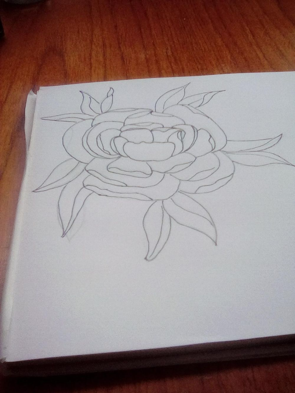 Line drawing peony - image 2 - student project