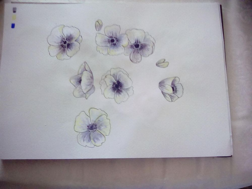 White anenomes - image 1 - student project
