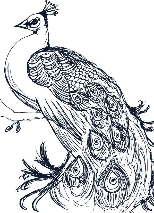 Peacock Beauty - image 1 - student project
