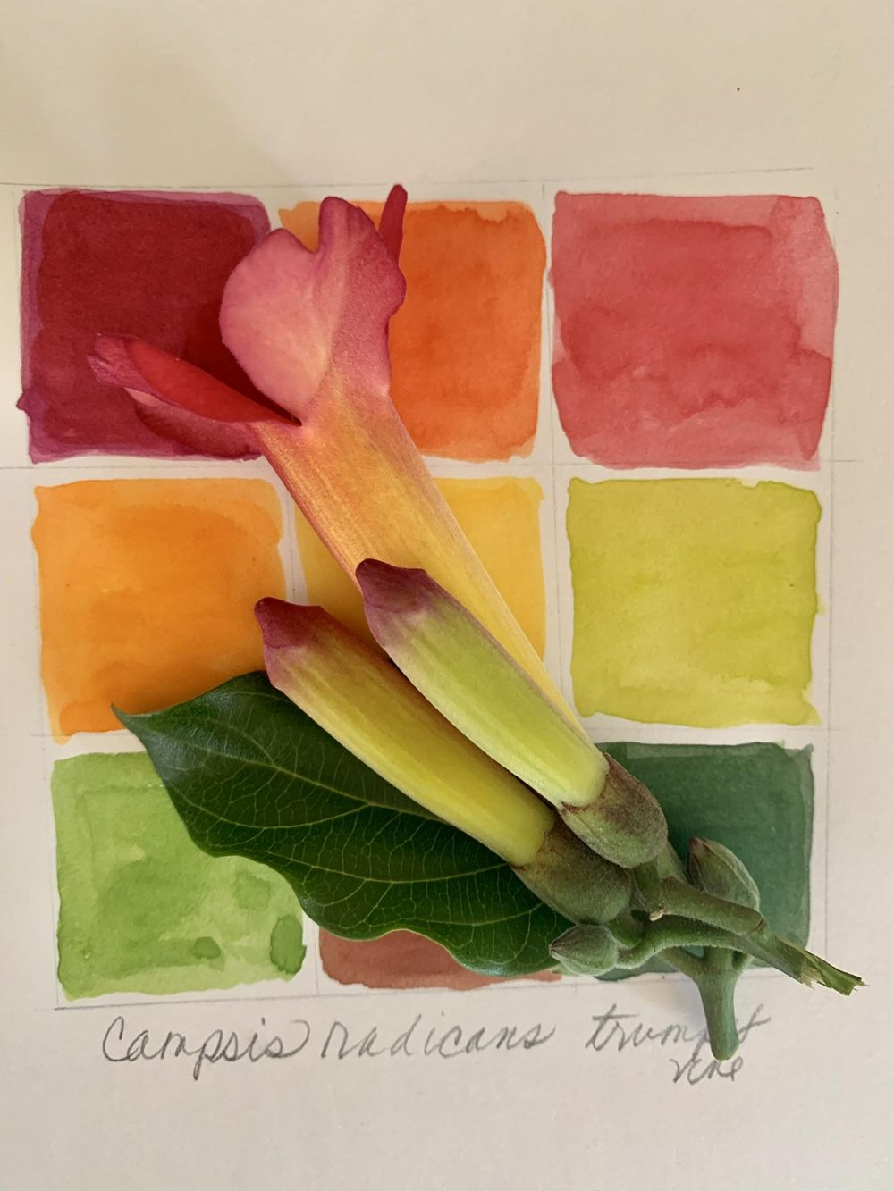 Finding Color in the Garden - image 1 - student project