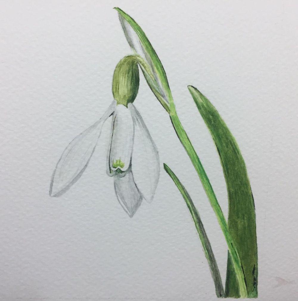 My Beginning Watercolor Portfolio - image 10 - student project