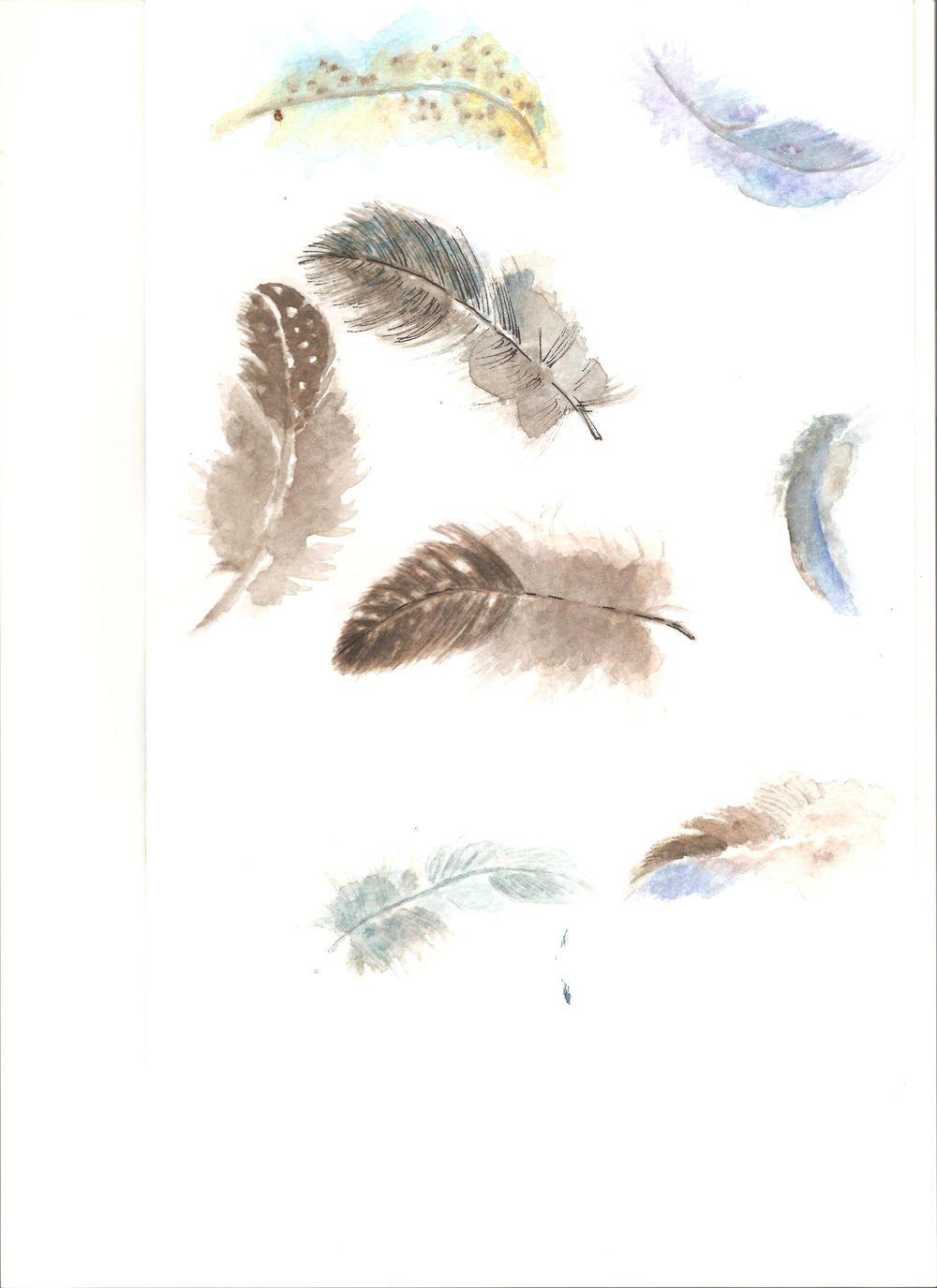feathers everywhere - image 1 - student project