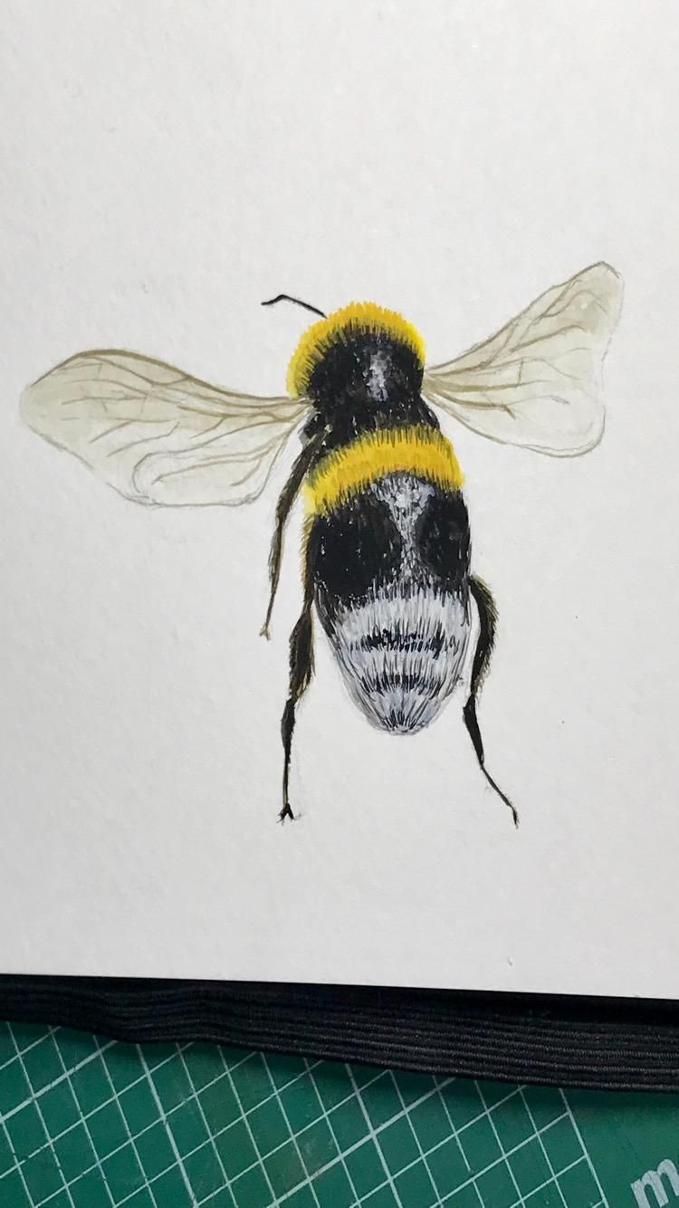 Bumble Bees - image 2 - student project