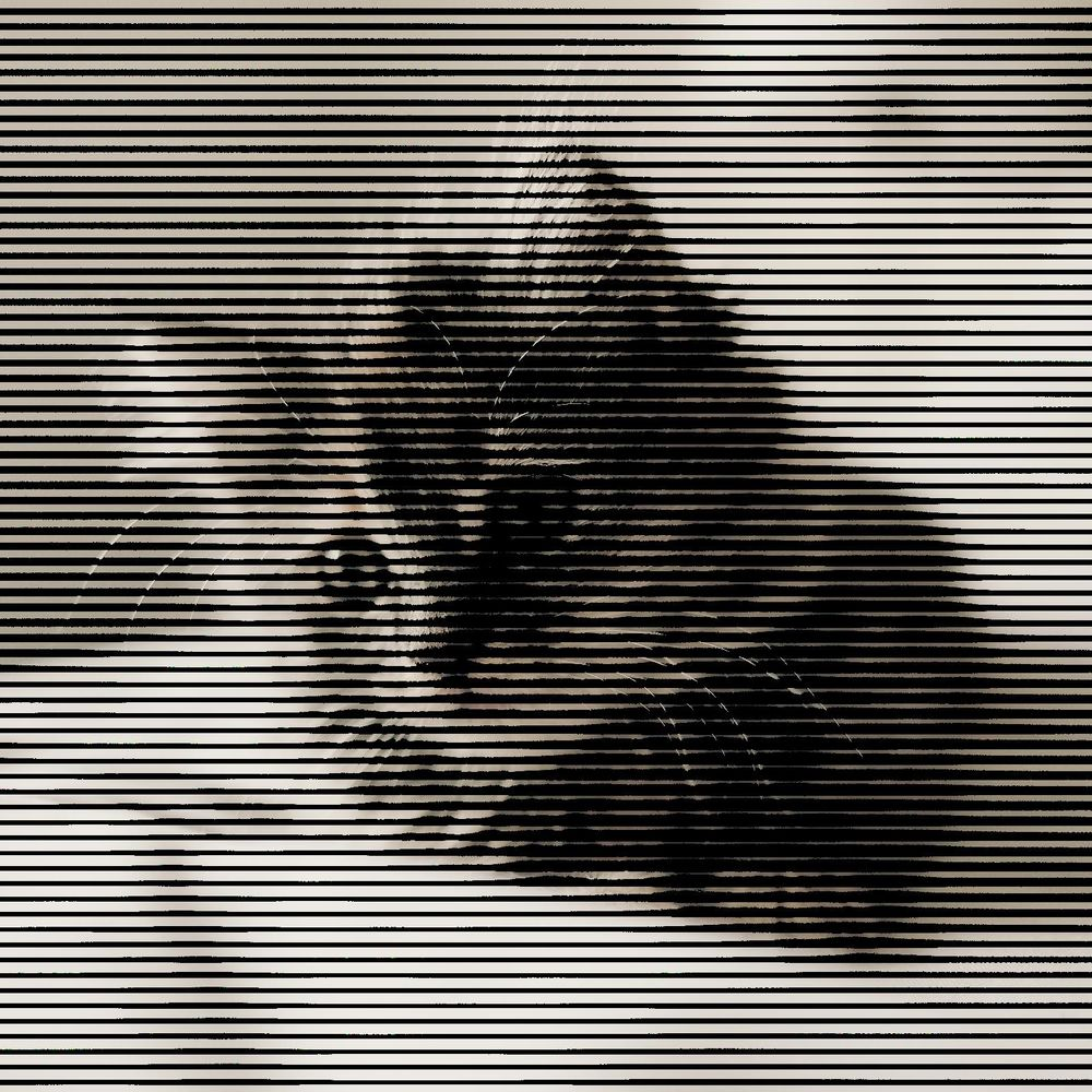 Halftone Cat - image 5 - student project