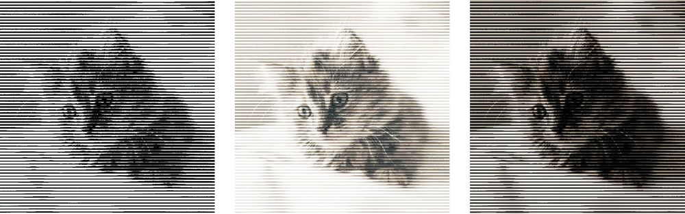 Halftone Cat - image 1 - student project