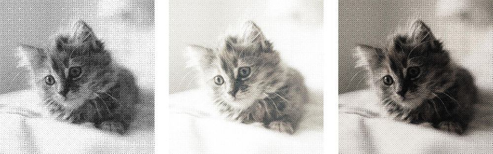 Halftone Cat - image 2 - student project