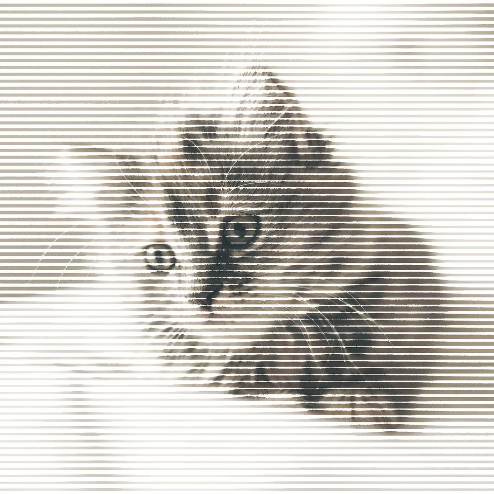 Halftone Cat - image 4 - student project