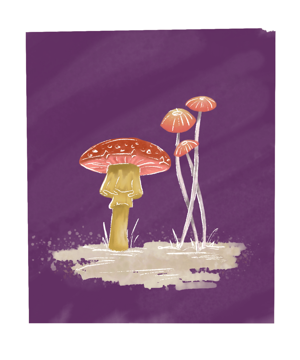 My Mushrooms - image 2 - student project