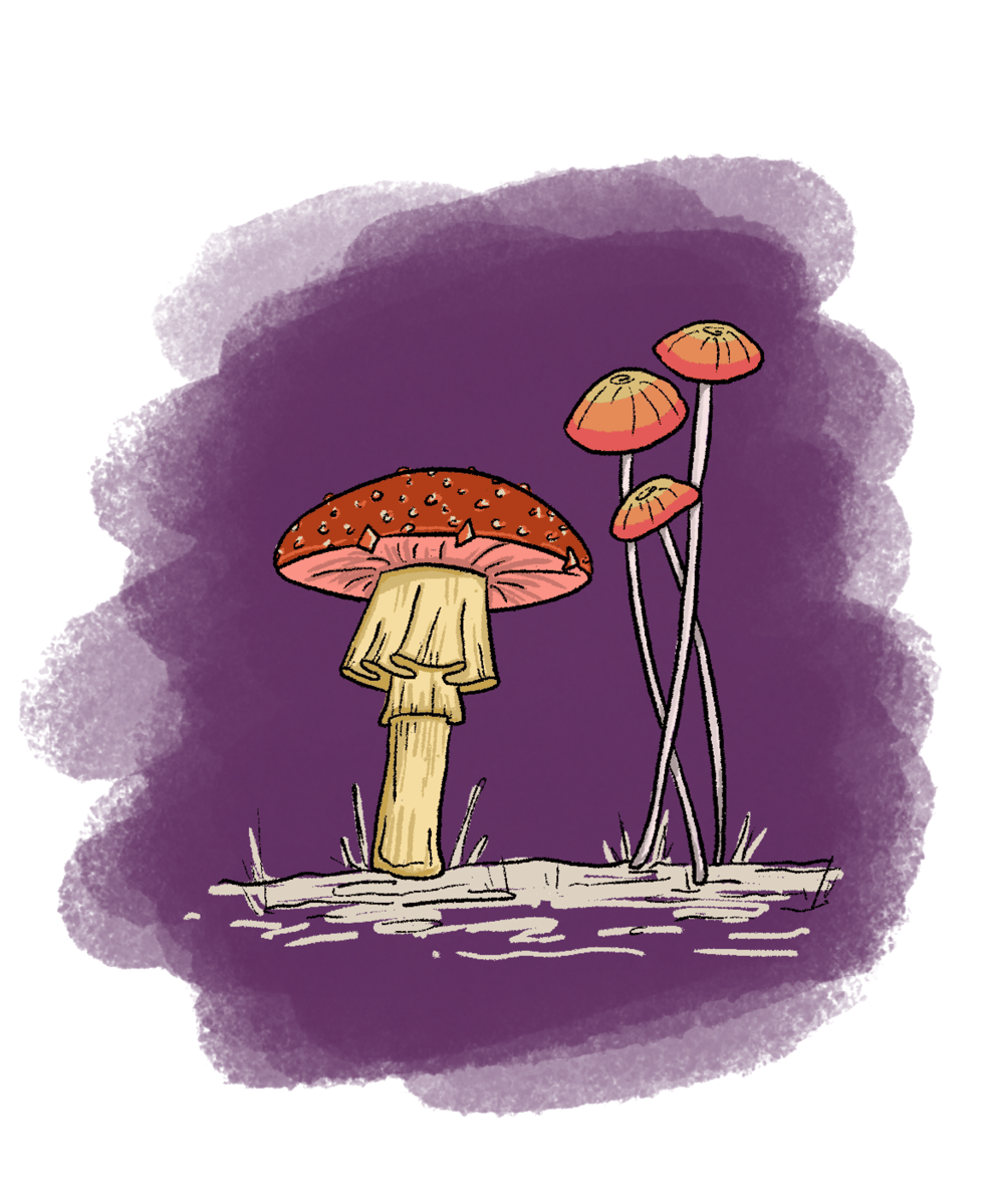 My Mushrooms - image 3 - student project