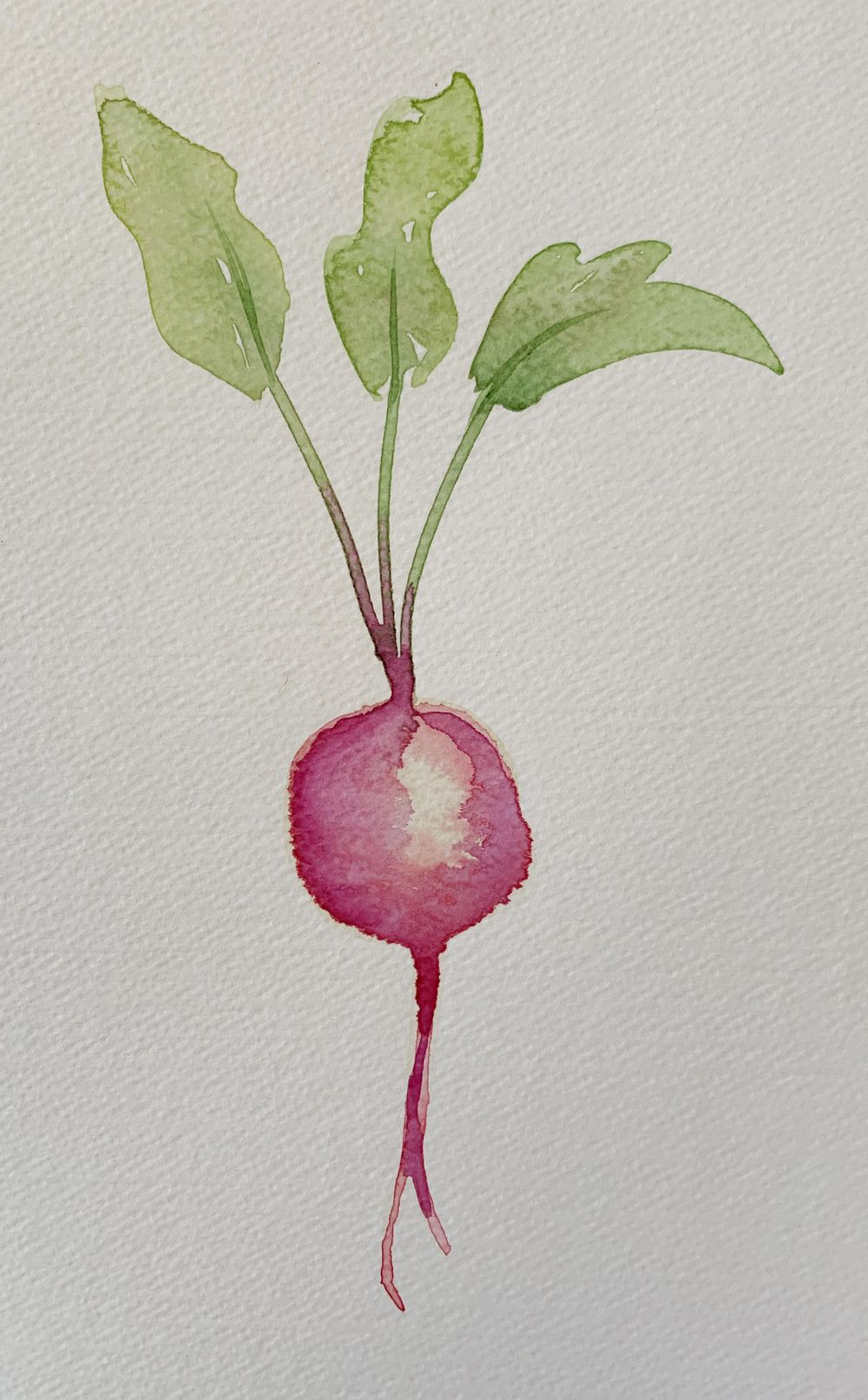 Robyn's veggies - image 4 - student project