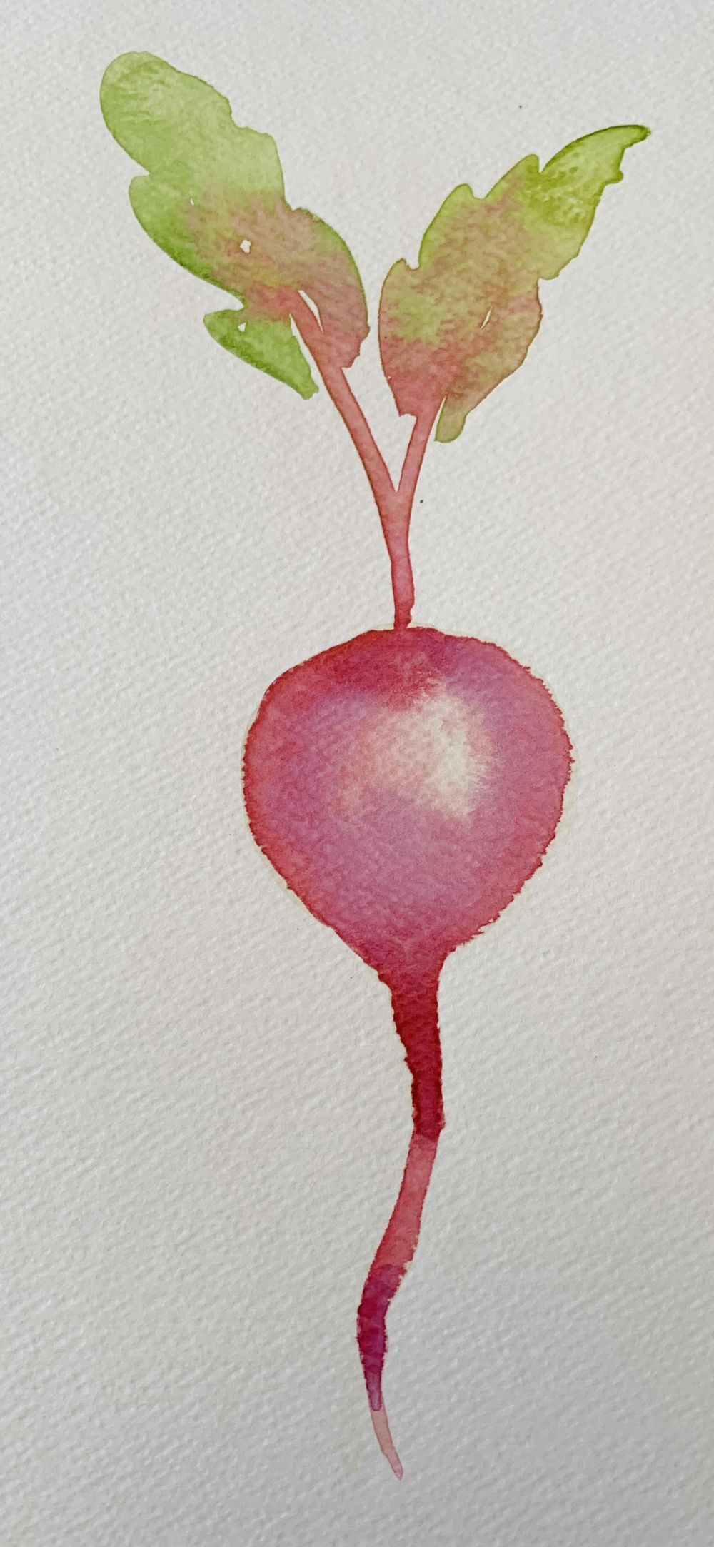 Robyn's veggies - image 3 - student project