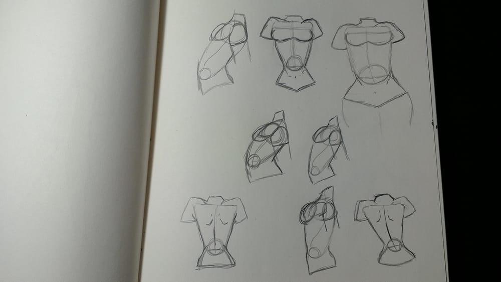 Female Torsos - image 3 - student project