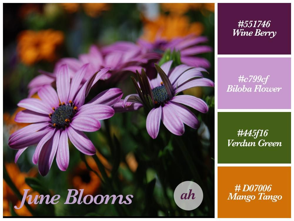 June Blooms Color Scheme - image 1 - student project