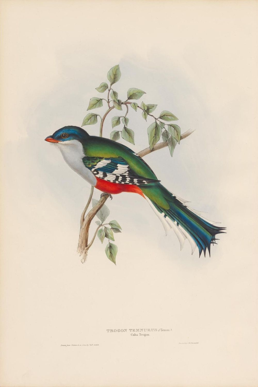 Vintage bird - image 4 - student project
