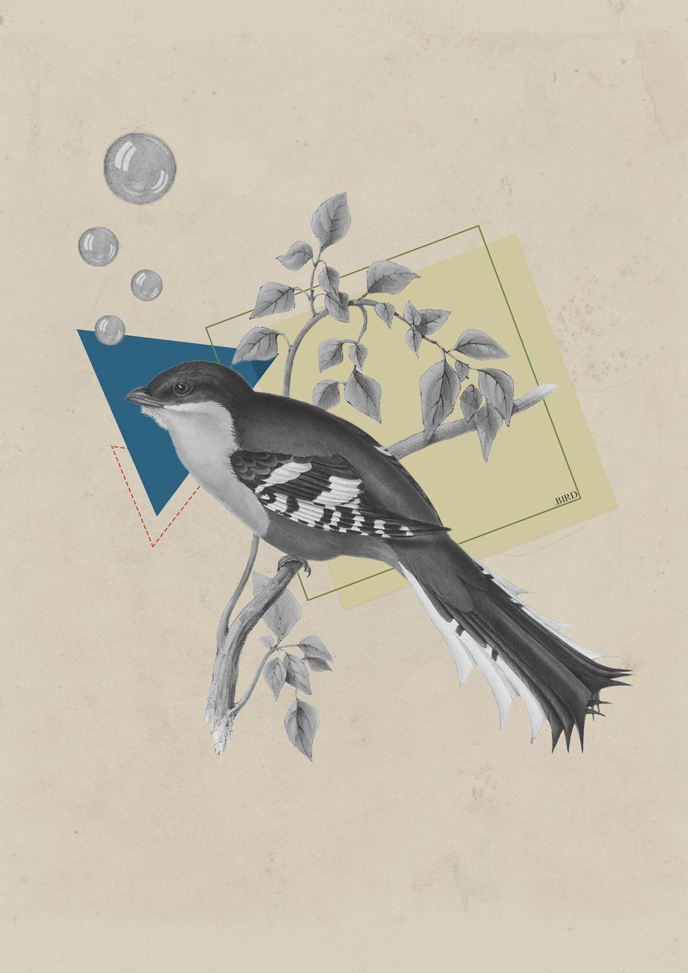 Vintage bird - image 3 - student project