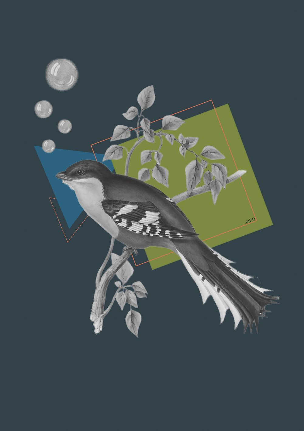 Vintage bird - image 2 - student project
