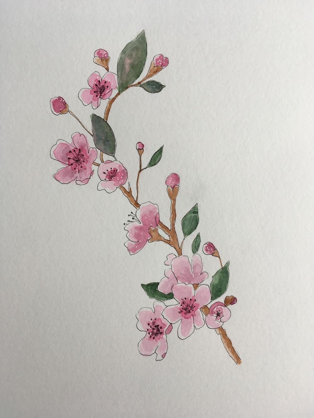 Cherry blossom - what a lovely class this is. - image 1 - student project