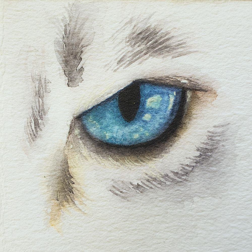 Animal Eyes   Ariana Iacono - image 2 - student project