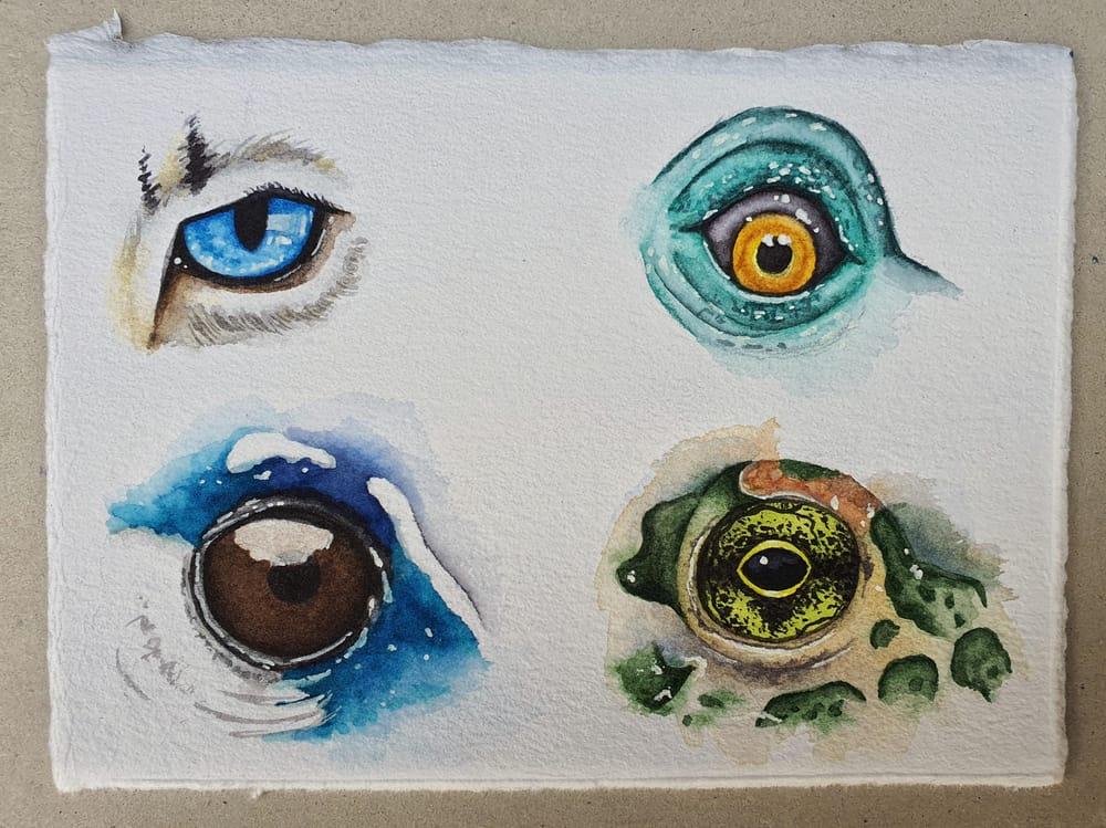 Animal Eyes   Ariana Iacono - image 6 - student project
