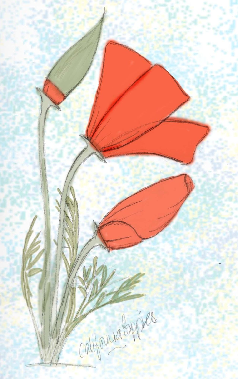 Poppies  - image 1 - student project