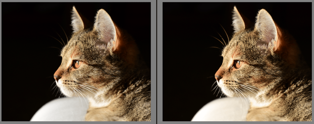 Rimpy the Cat - image 1 - student project