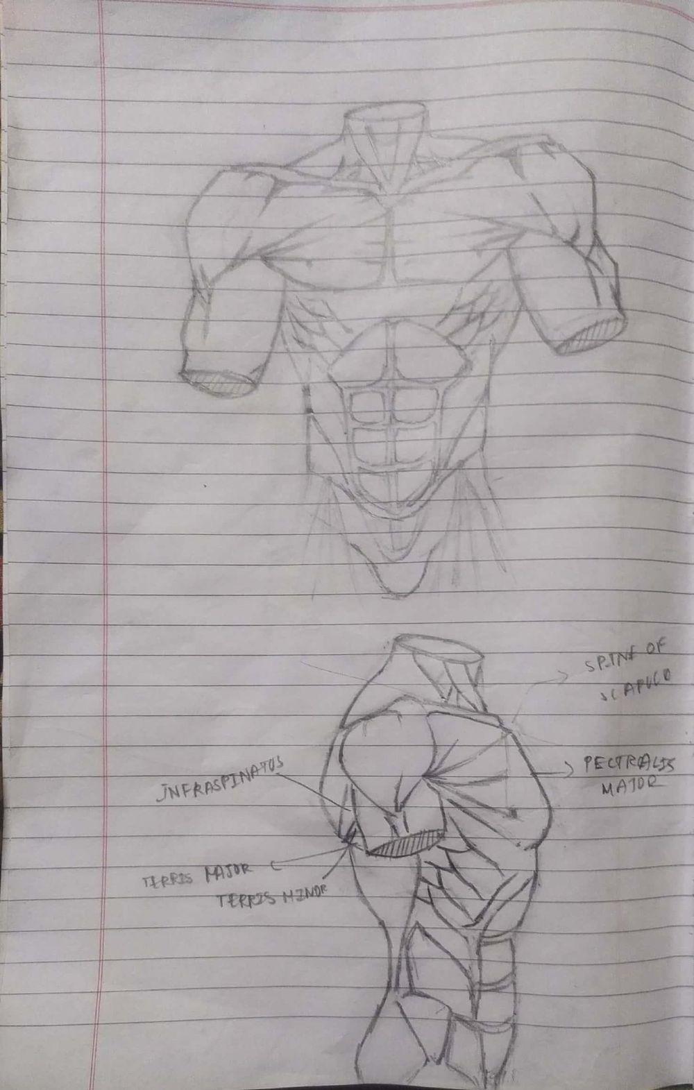 male torso - image 1 - student project