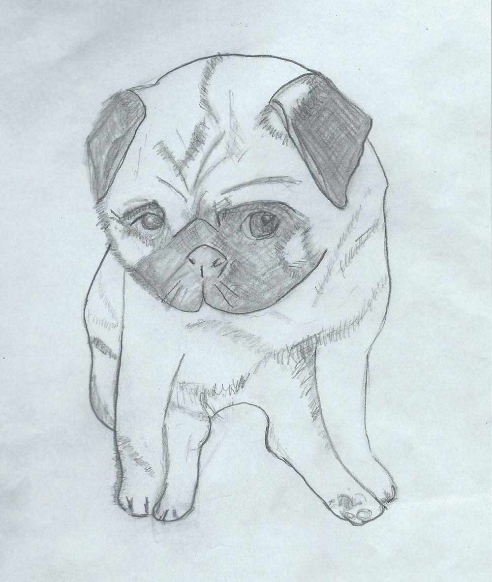 Pet Portrait Halftone - image 3 - student project